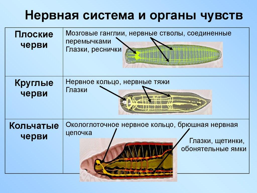 избавление паразитов человека