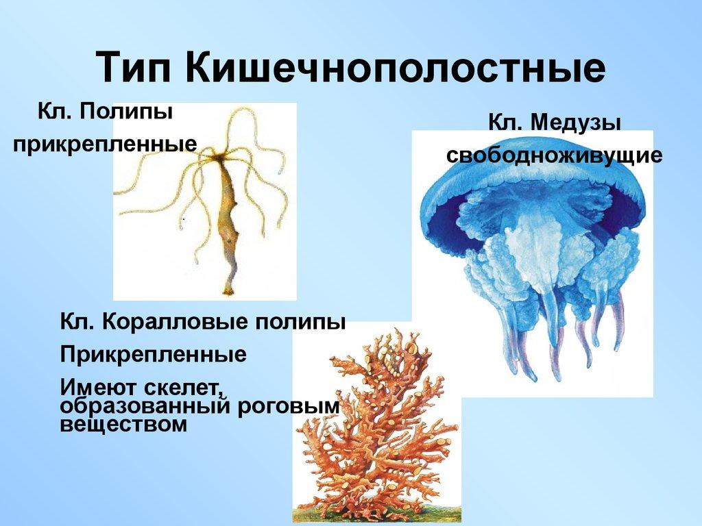 избавление от паразитов в организме
