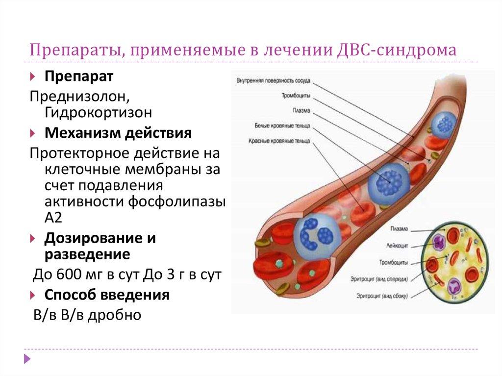 универсальное лечение от паразитов