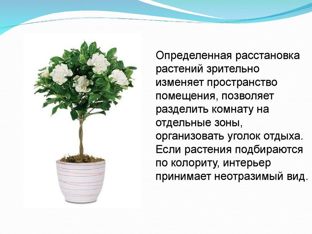 цветущие комнатные растения их фото