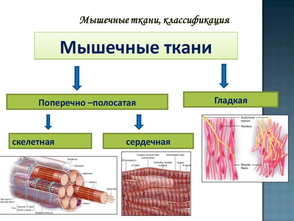 Курс фармацевтического факультета