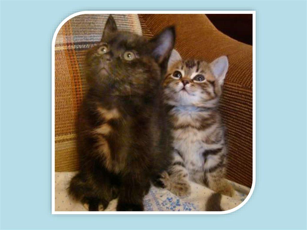 Питание кошки в домашних условиях 146