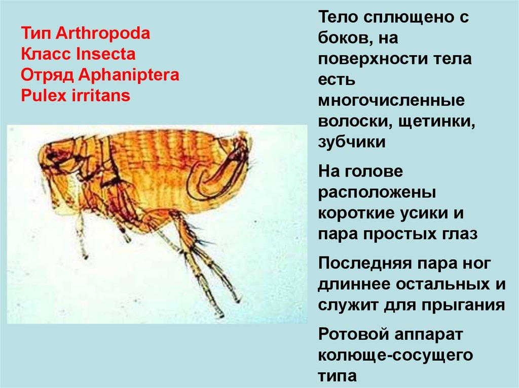 лекарство от запаха изо рта и паразитов