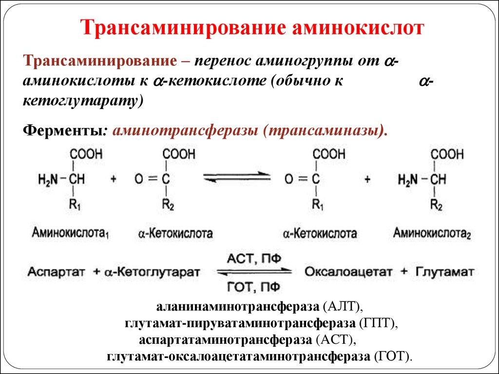 Трансаминаза