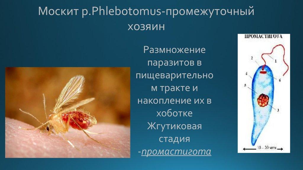 Паразитарные заболевания человека  причины симптомы и