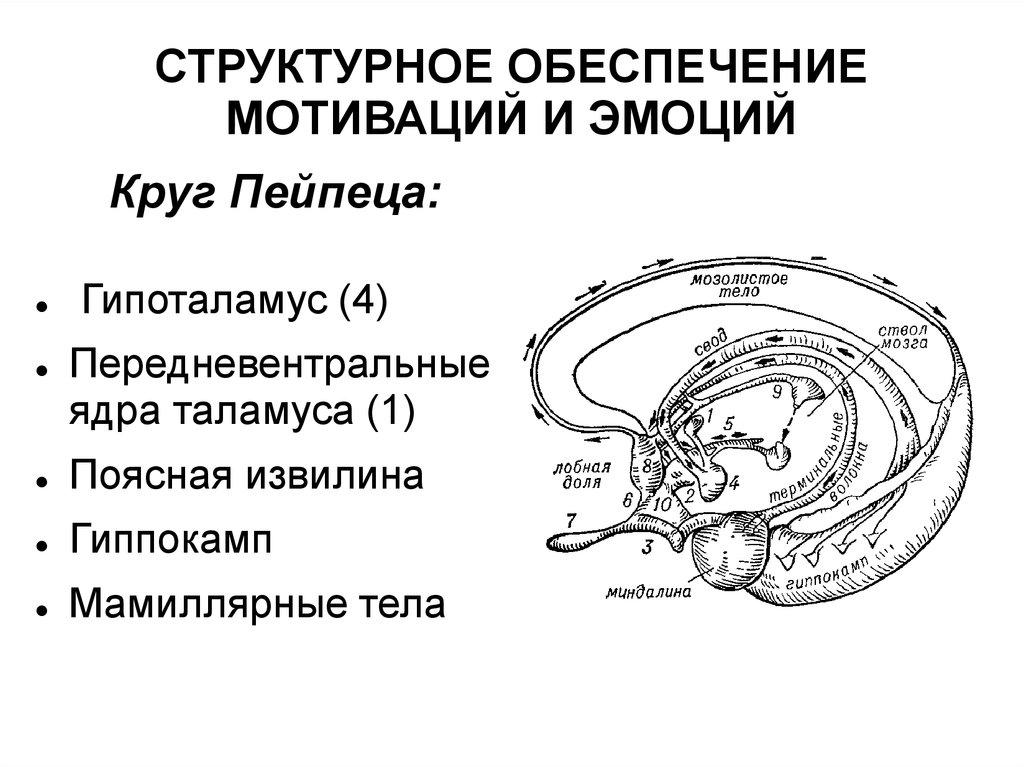 Вегетарианство и секс: мужское здоровье | Вегетарианский.ru