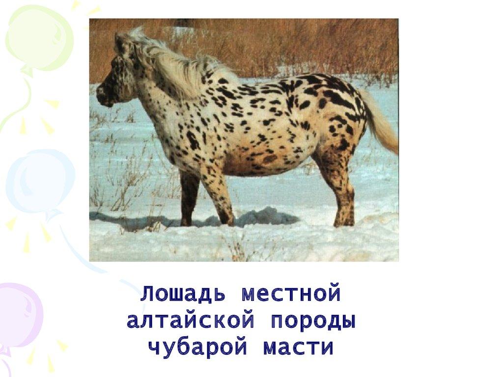 h презентацию по биологии пароды собак