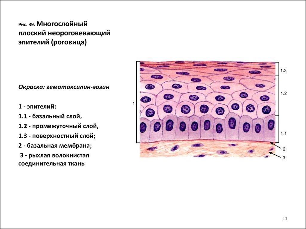 Плоский эпителий в мазке при беременности