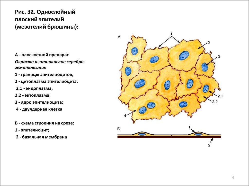 Мерокринный