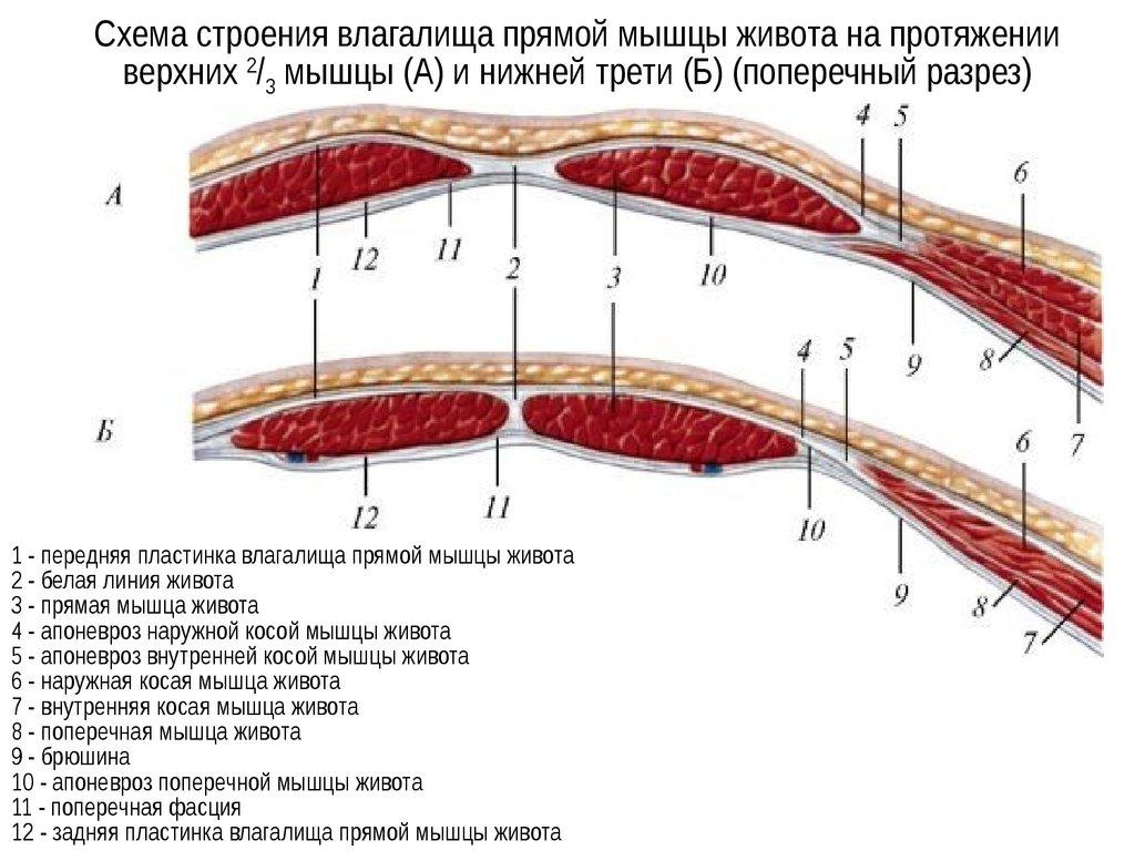 plastinki-dlya-vlagalisha