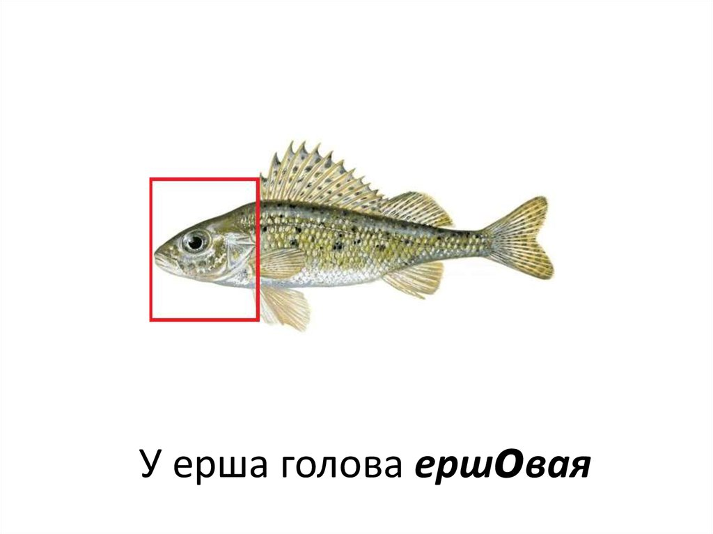 способы приготовления рыбы на рыбалке