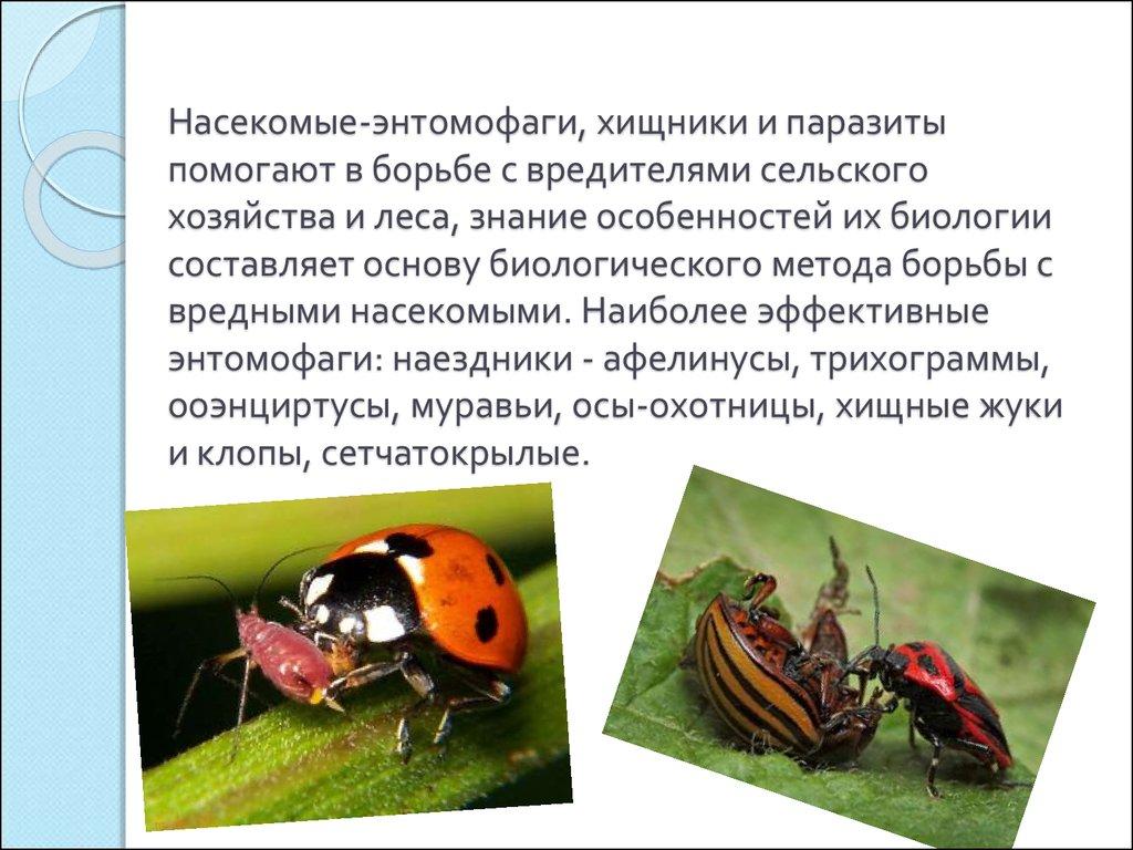 очищение от паразитов в организме человека