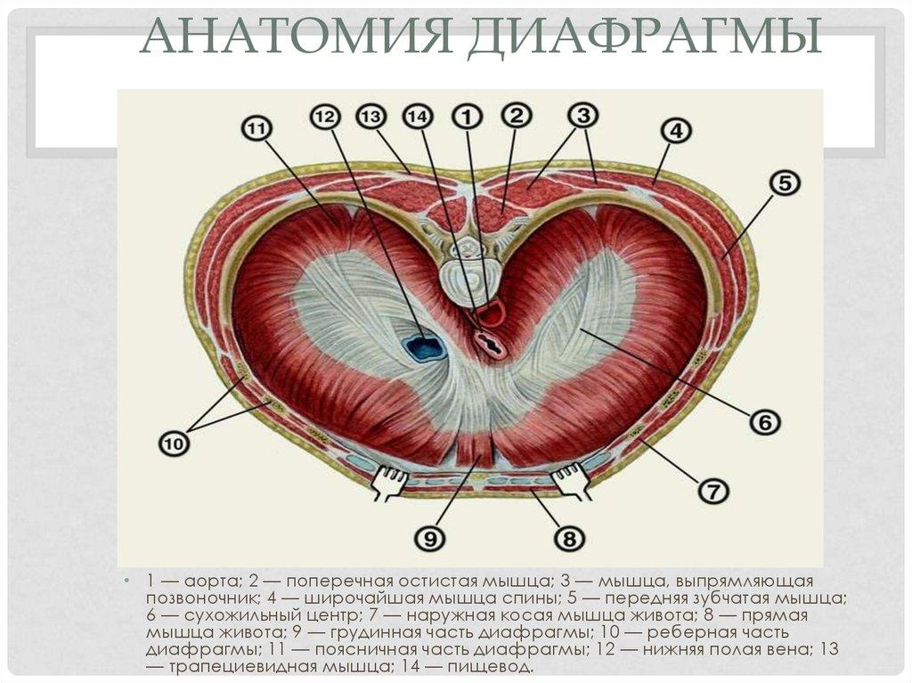 Рисующие диафрагмы