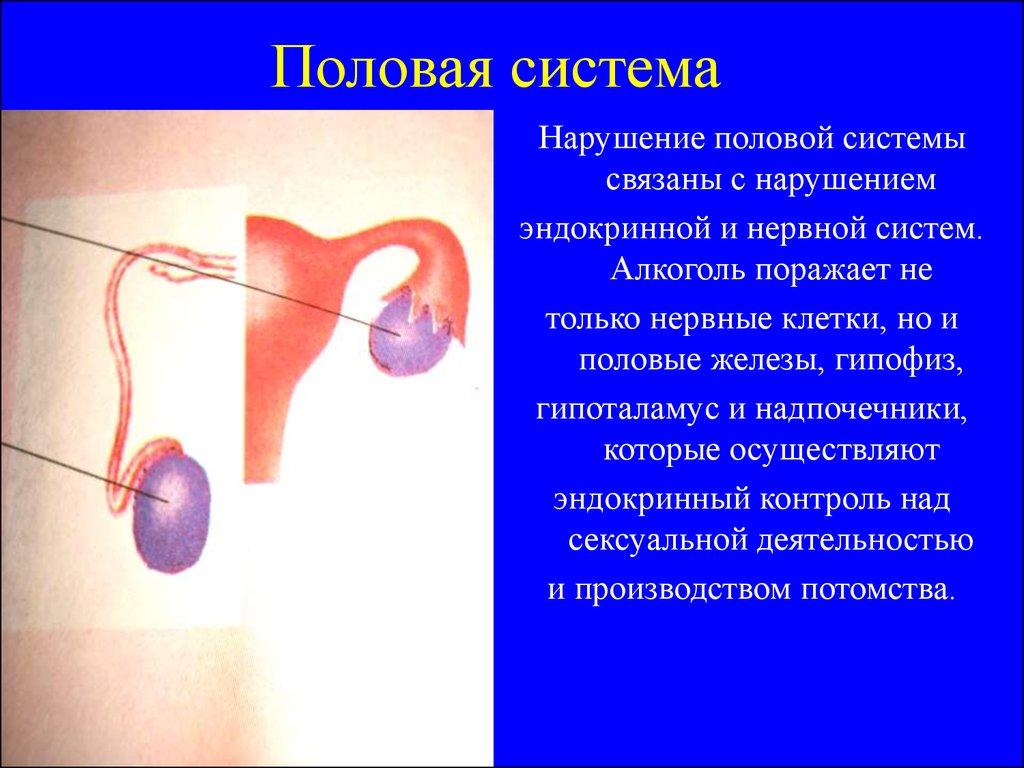 Алкоголь в сперматозоидах