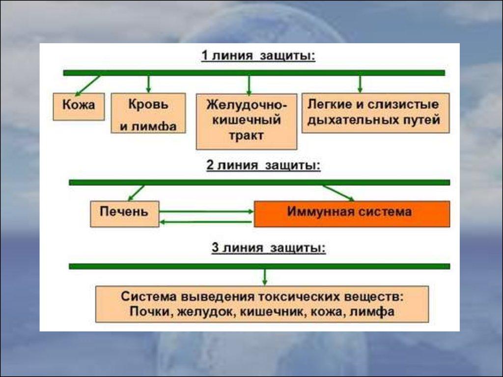 трипонасома схема