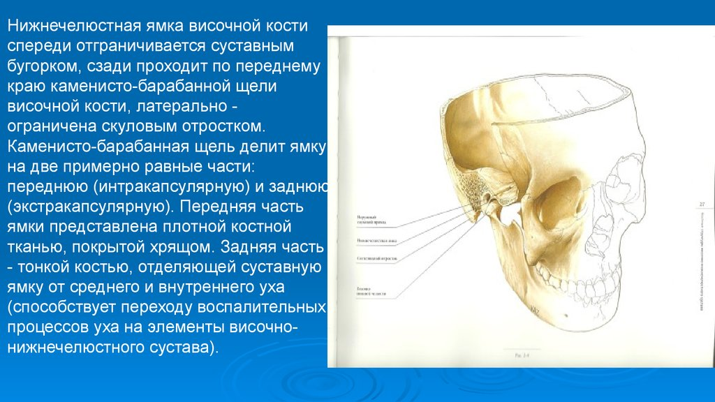 височно нижне челюстной сустав в детском саду