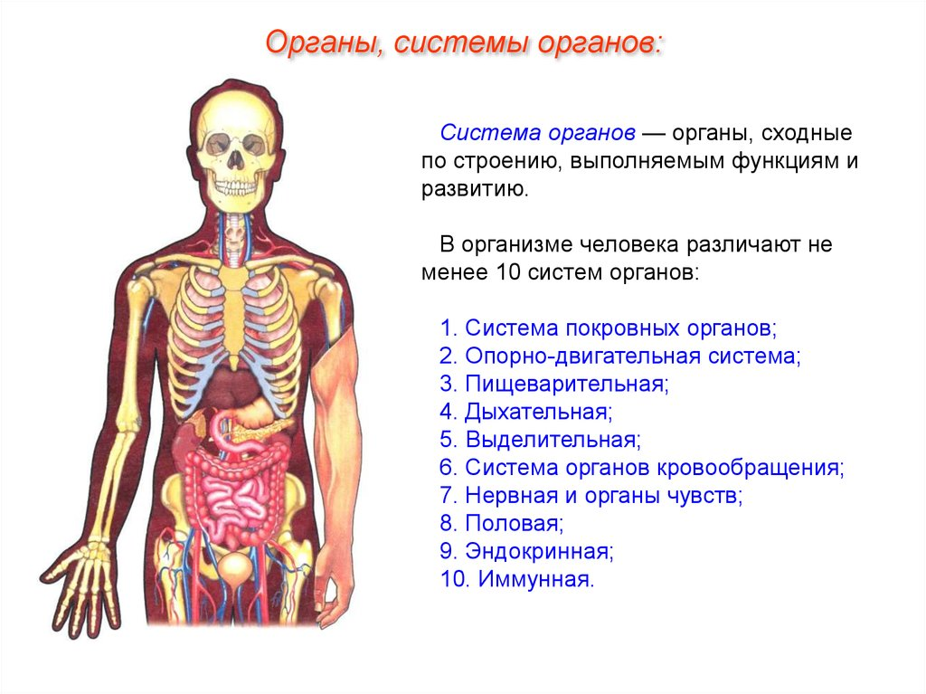 виды тканей человека рисунки