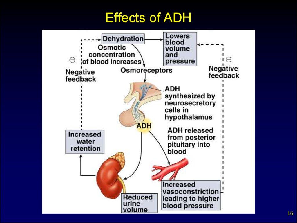 Discuss the effects of hormones