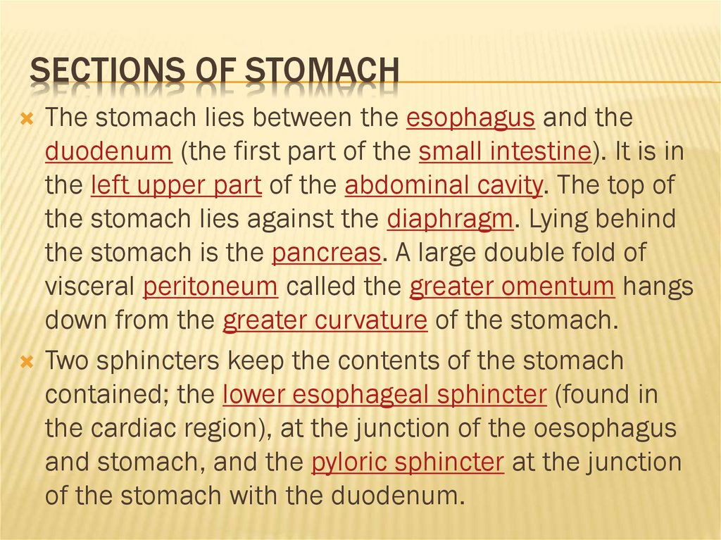 Sections of stomach