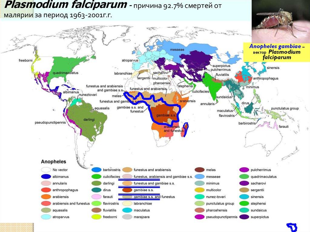 паразиты в тканях человека признаки