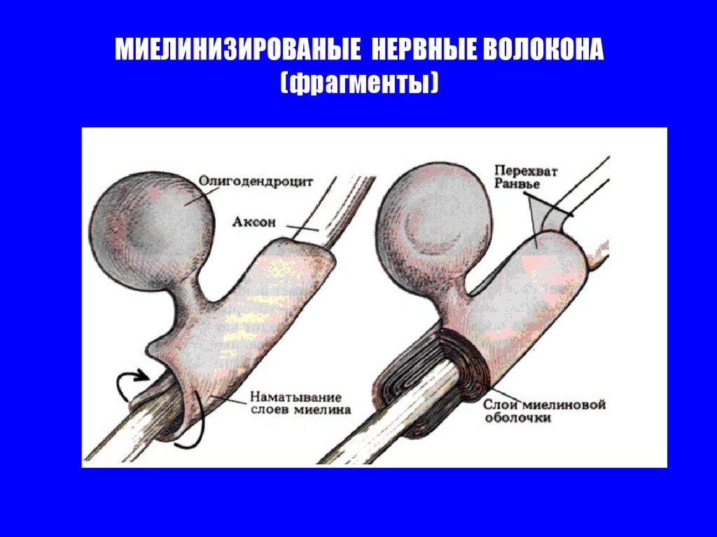 физиологический метод похудения