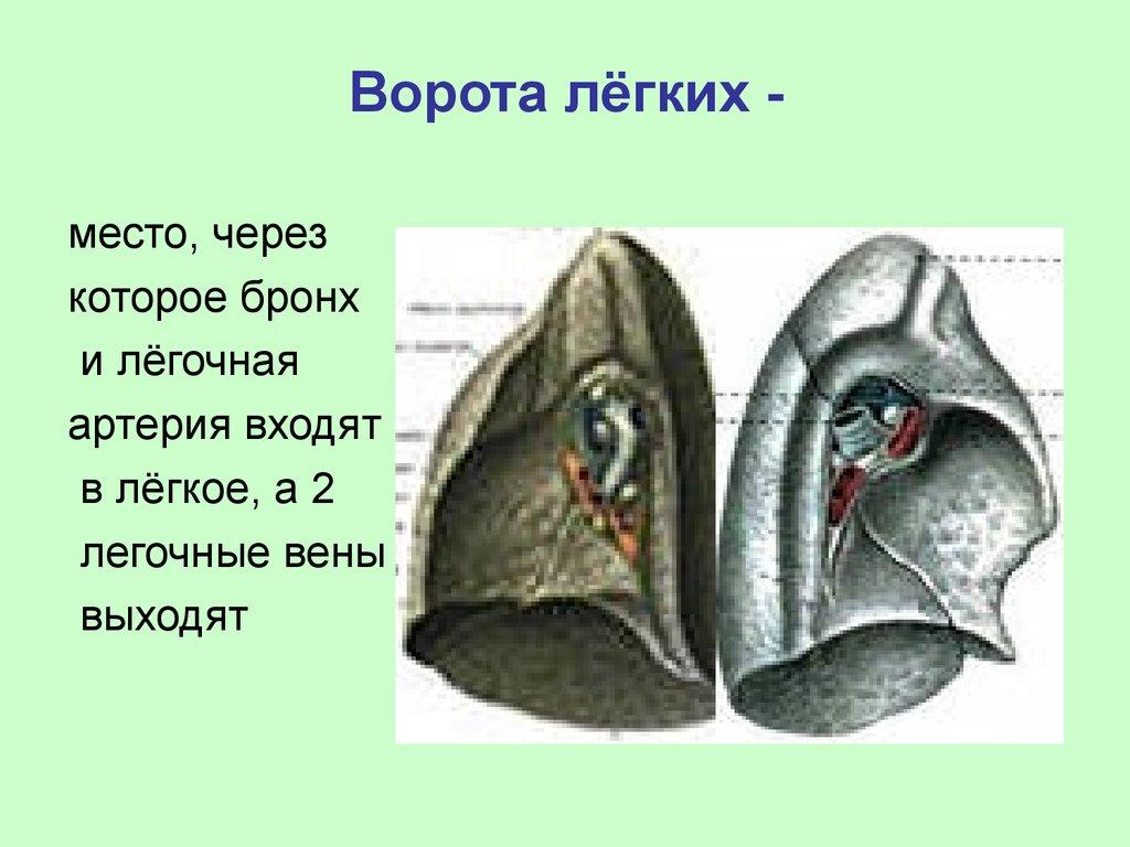 smotret-belie-tsipochki