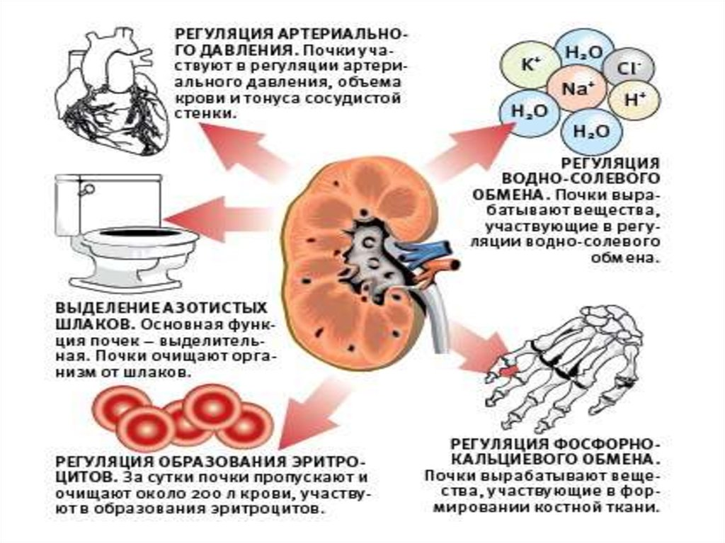 Может ли комар переносить болезни