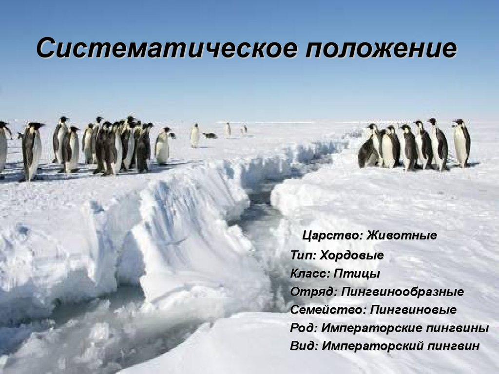 Пингвины мистера Поппера (2011) смотреть онлайн или ...