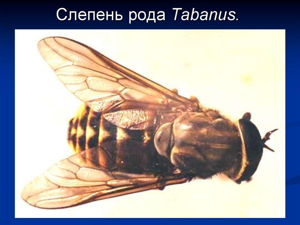 членистоногие паразиты человека