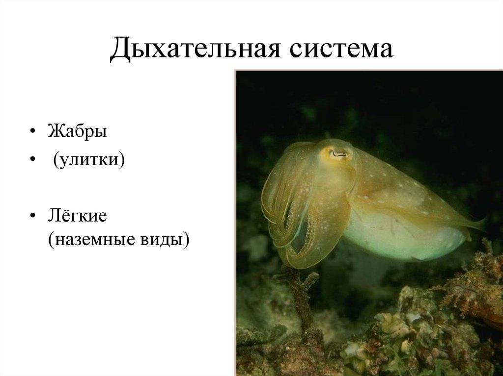 Econodynamics: