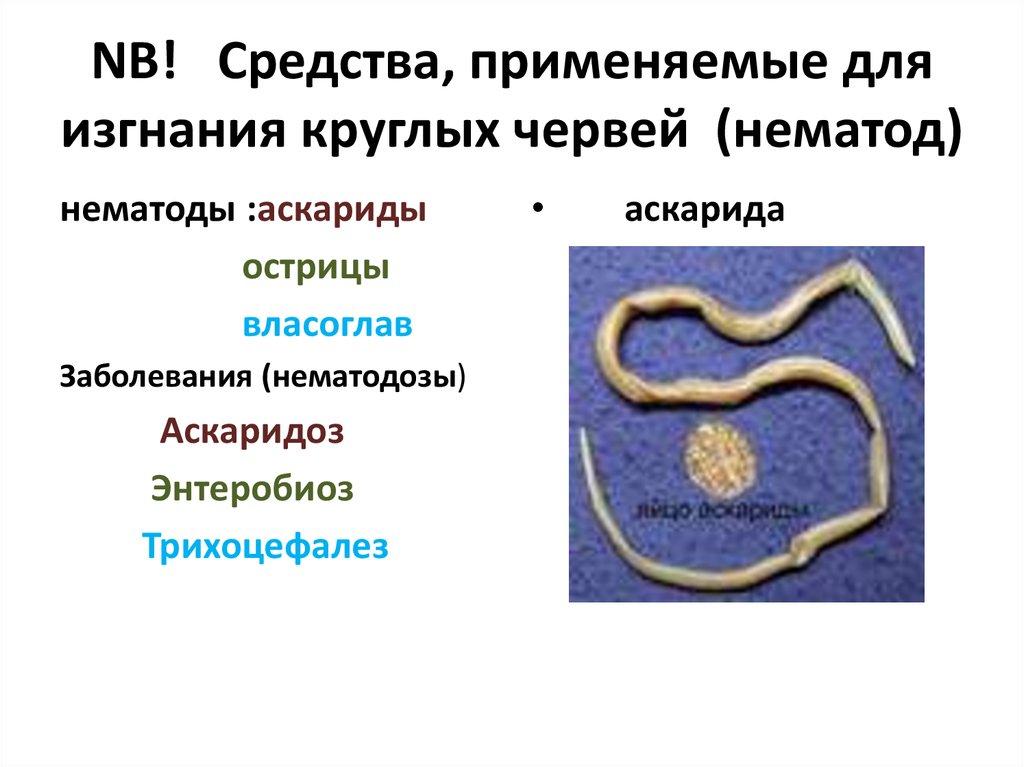 декарис от паразитов в организме человека