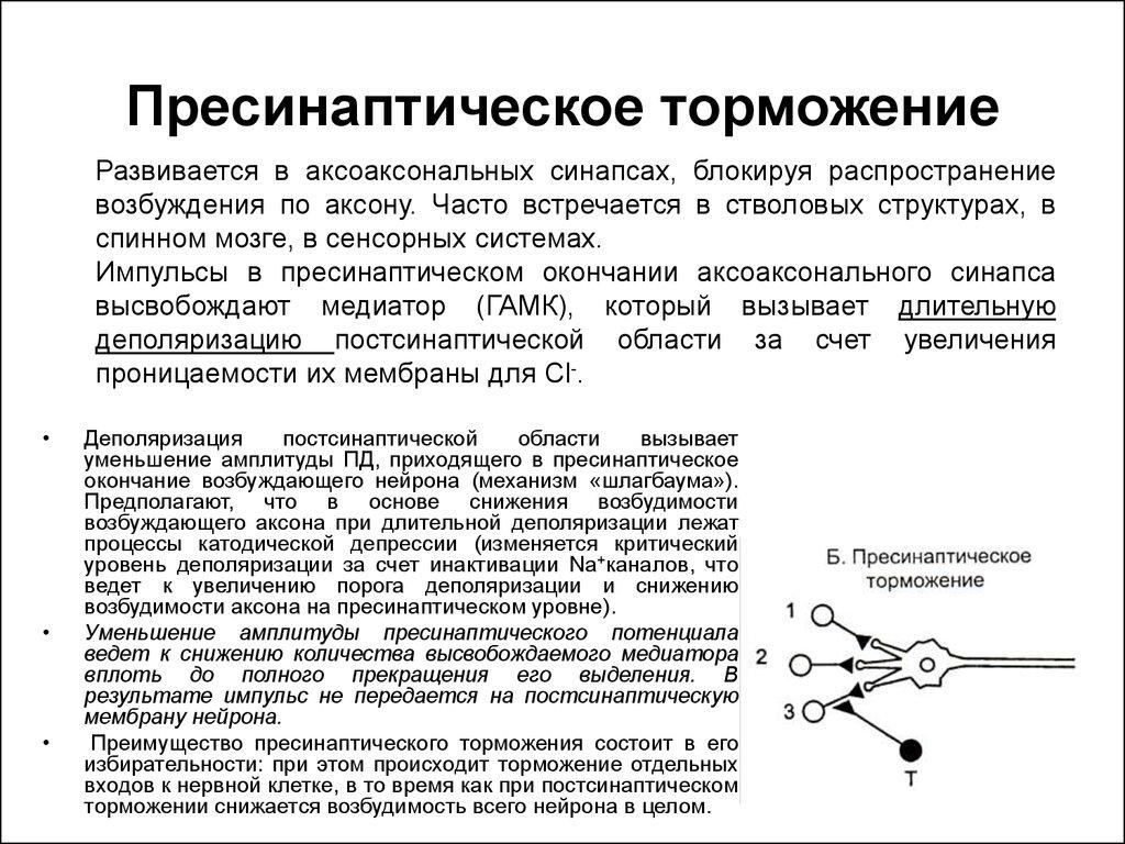 Торможение не связанное с тормозными синапсами