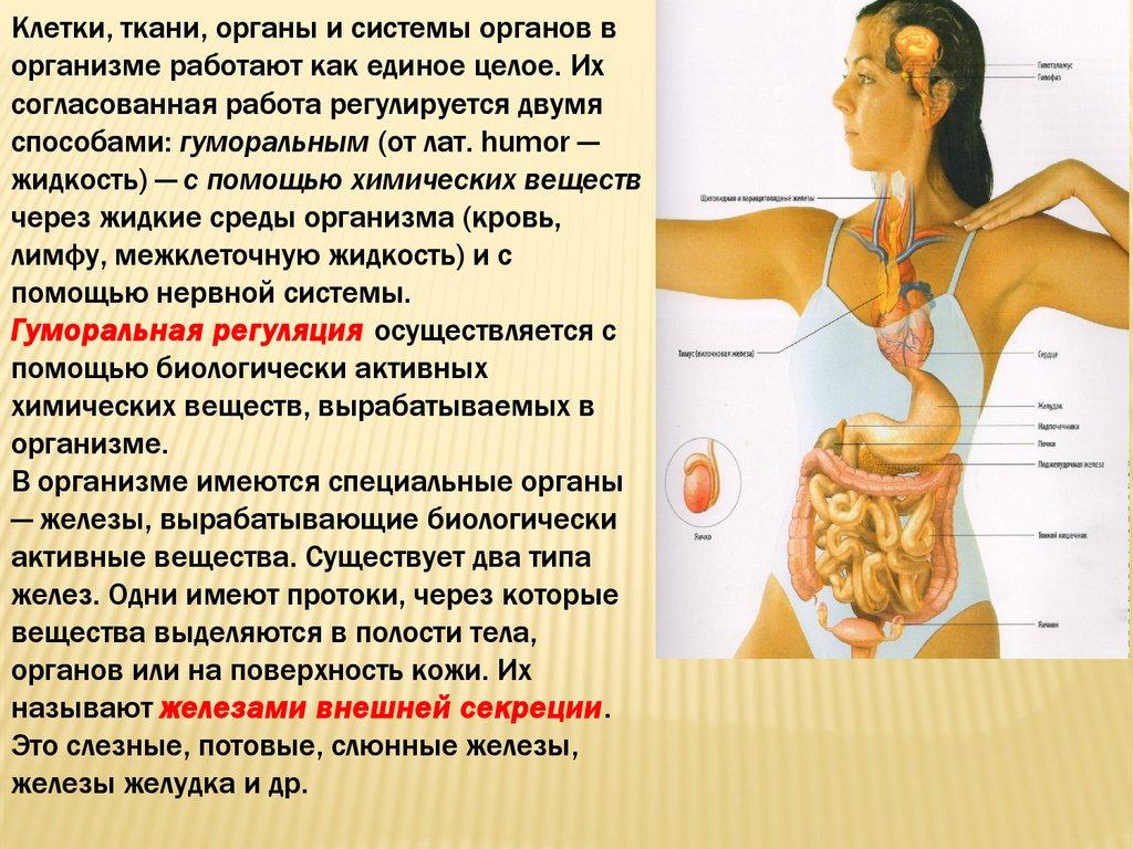 От перенапряжения отдельных органов и систем