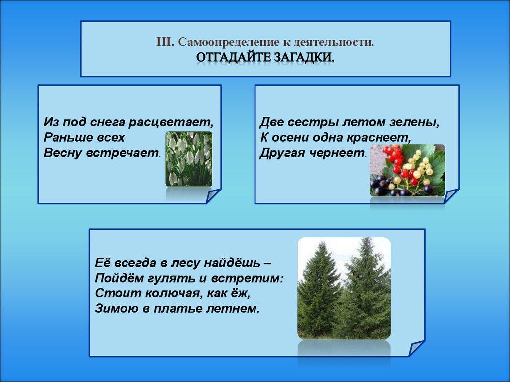 презентация значение растений на земле 3 класс