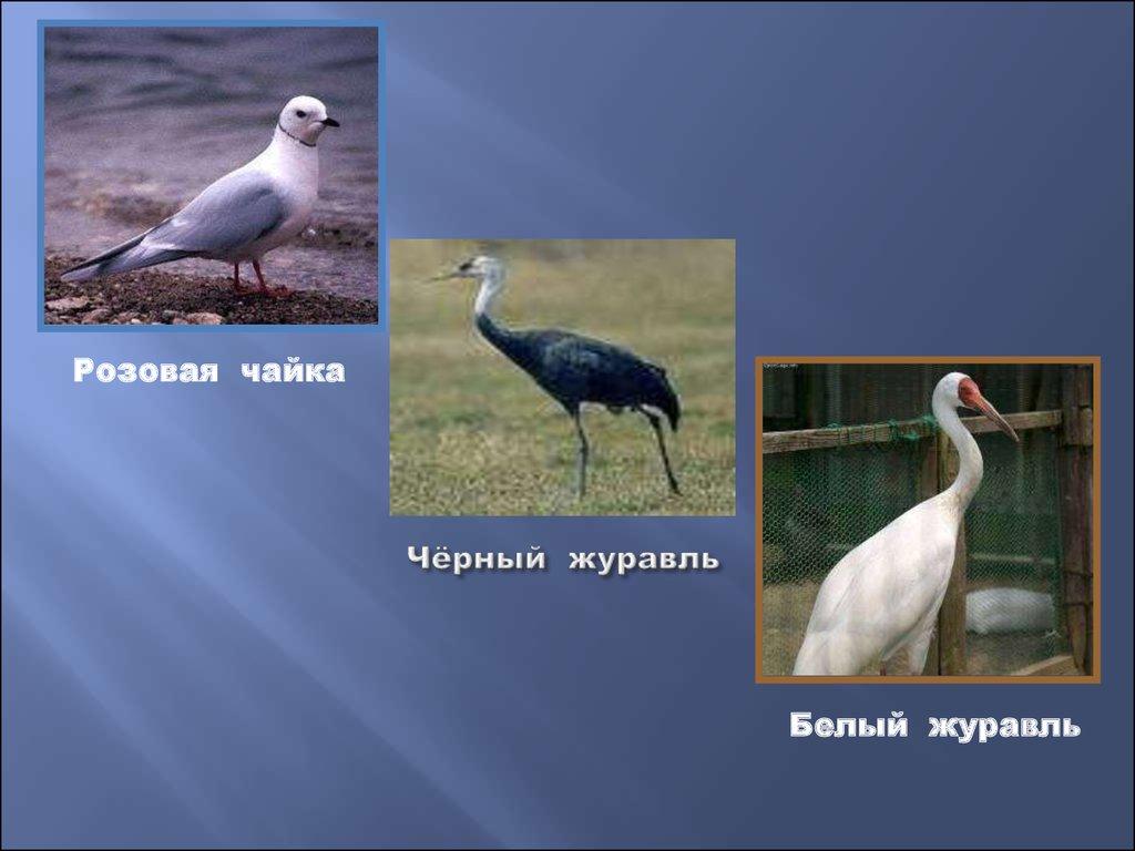 животные самарской области занесенные в красную книгу