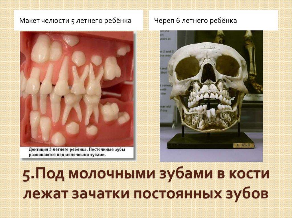 Как часто можно делать анестезия при лечении зубов у детей