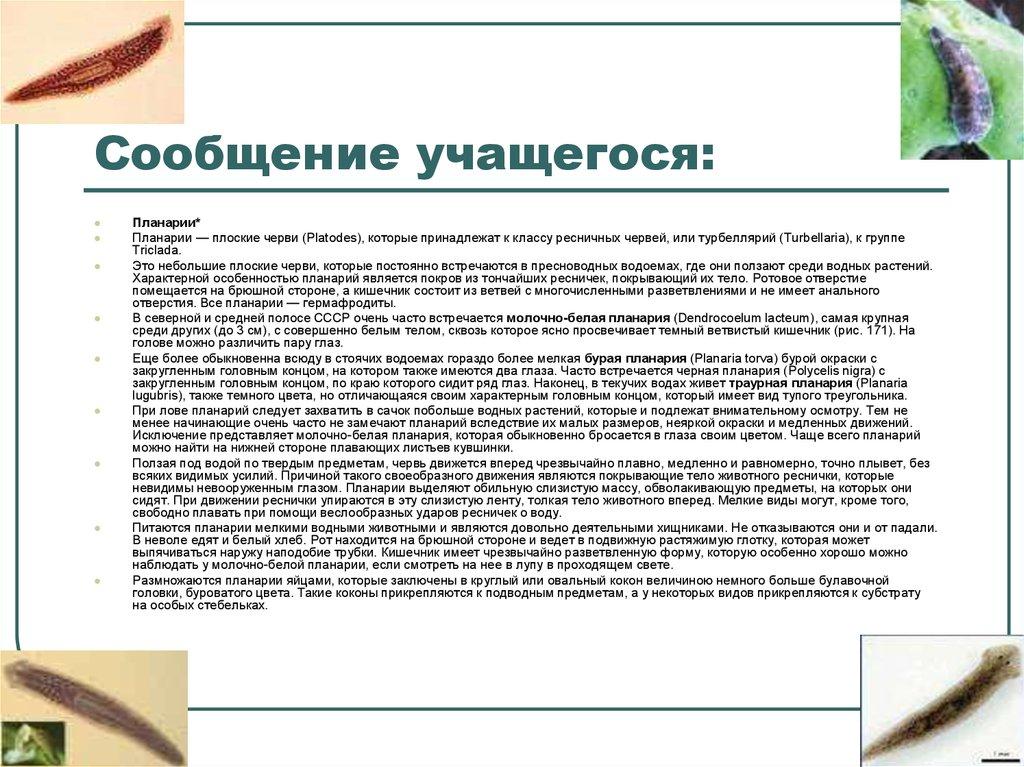 Тип Плоские черви. Белая планария - online presentation