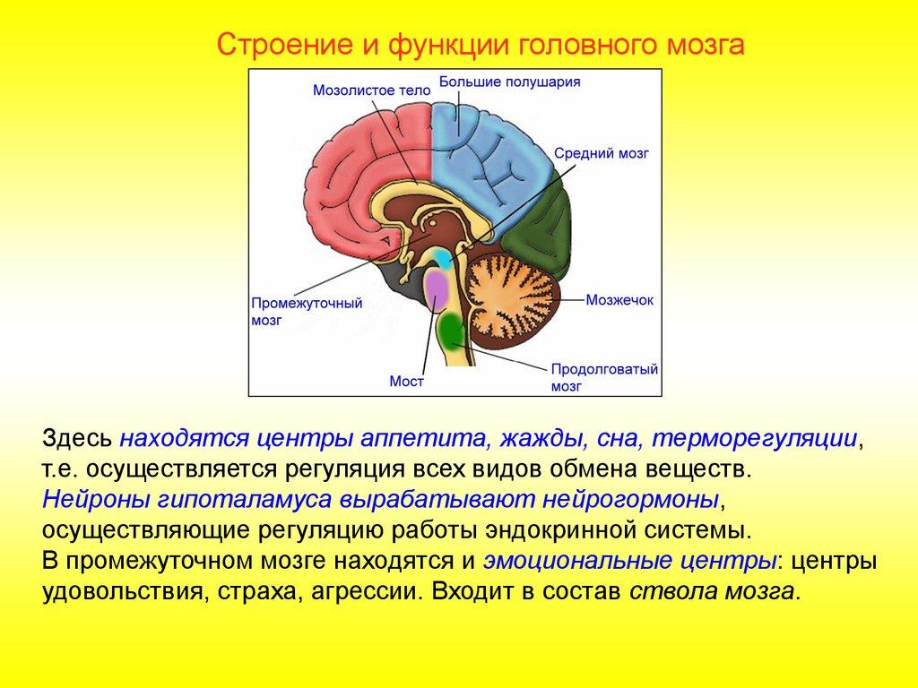 Нейрогормон