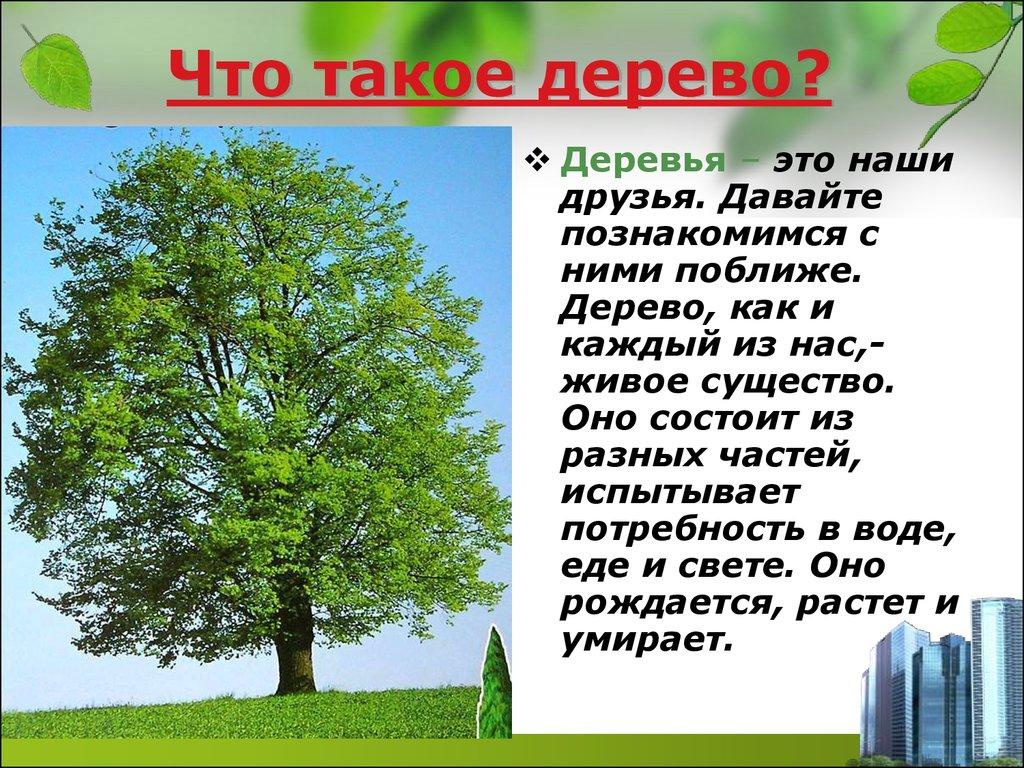знакомство деревьев для 1 класса