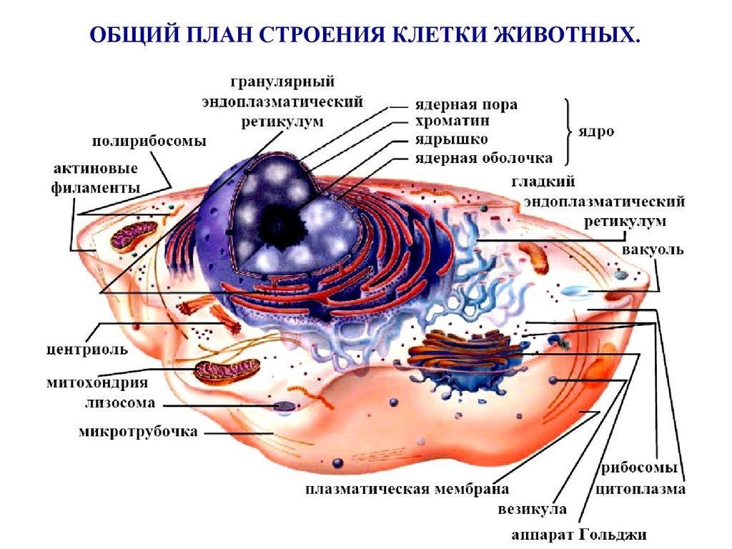 лецитин от холестерина форум
