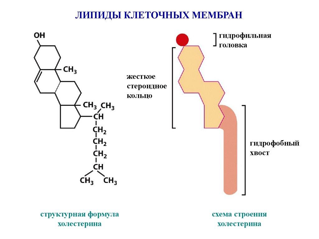 Сфингомиелин