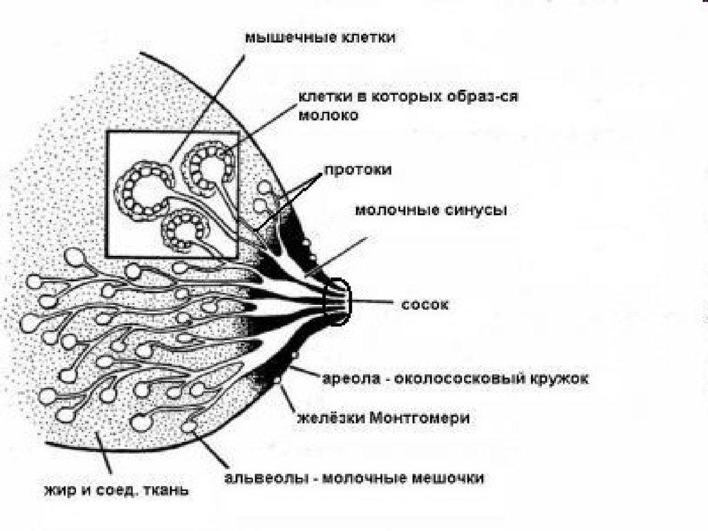 Аппараты Илизарова - Снятие