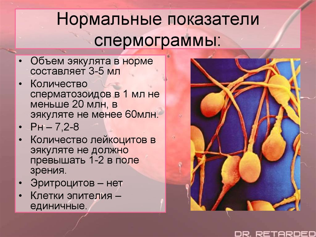 normativnie-pokazateli-spermogrammi