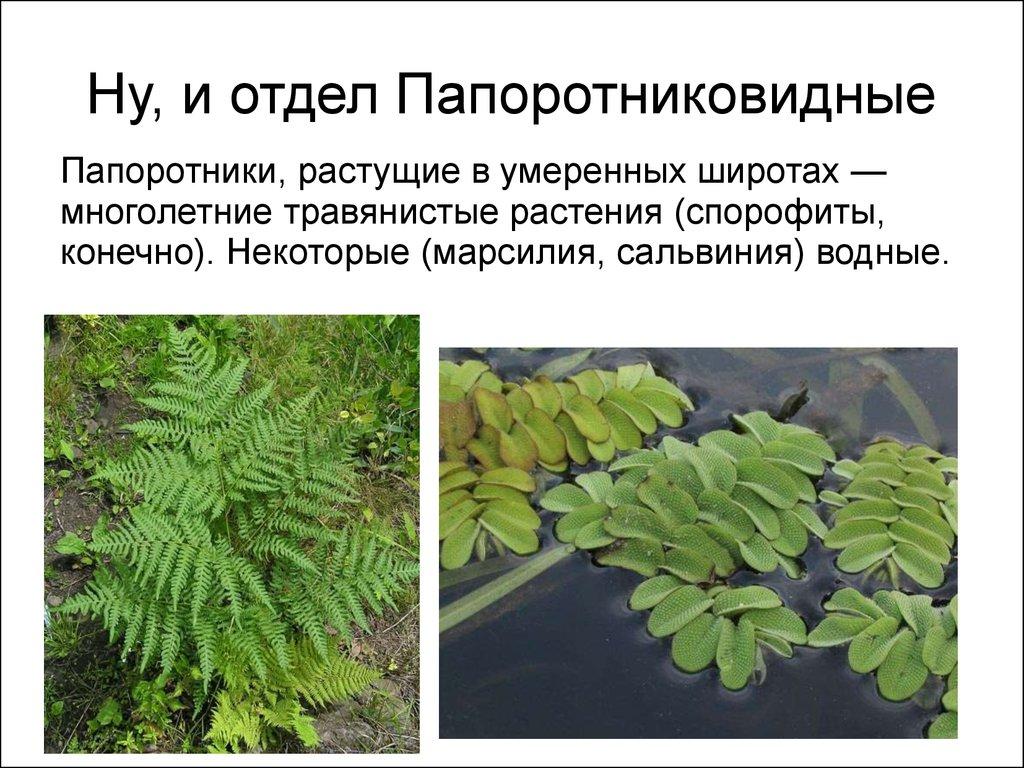 систематика зеленых водорослей таблица