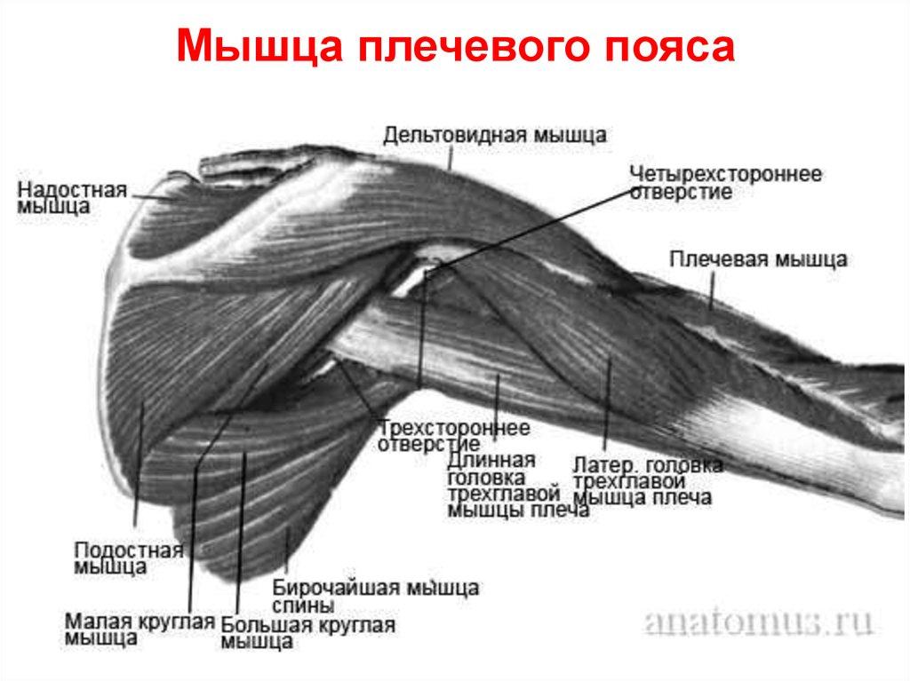 Почему образуются ямочки на треугольной мышце под губам