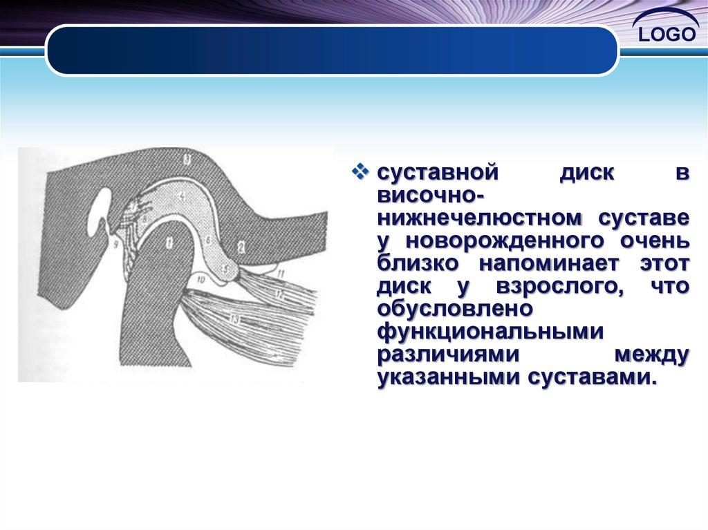 биомеханика внчс суставной путь