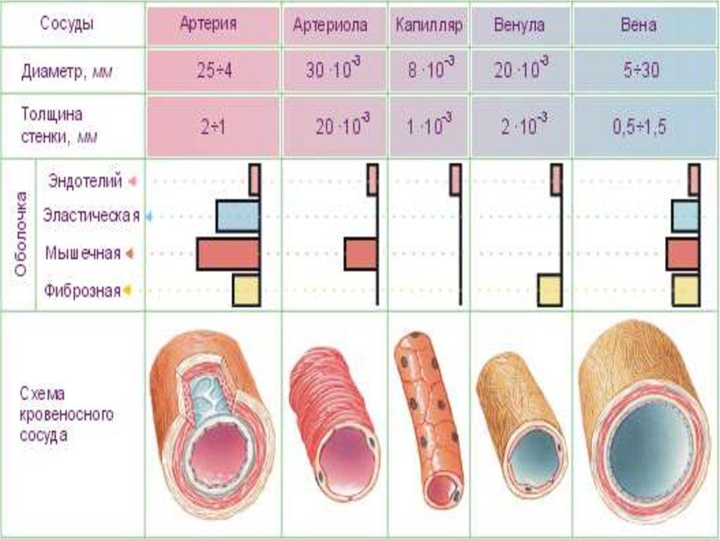 Для профилактики тромбоза глубоких вен конечностей