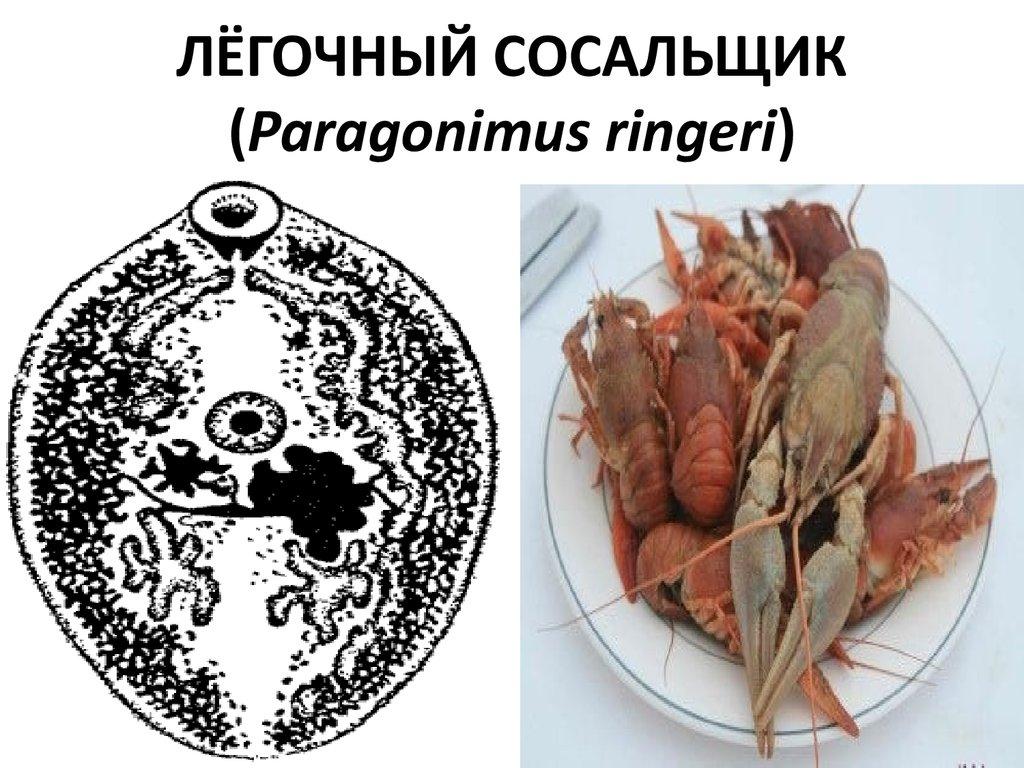 bbc паразиты человека