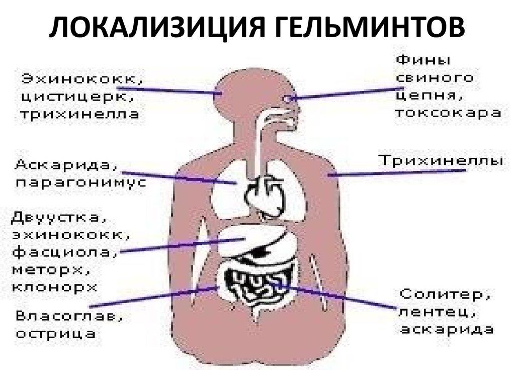 круглые черви паразиты человека лечение