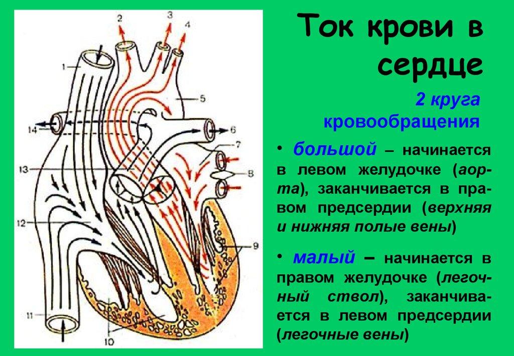 Вздутие вен в паху у мужчин